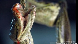 matadero_serpientes_05