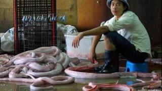 matadero_serpientes_09