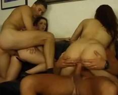 Bear sex blowjobs