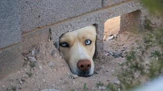 Giappone – amicizia tra cani